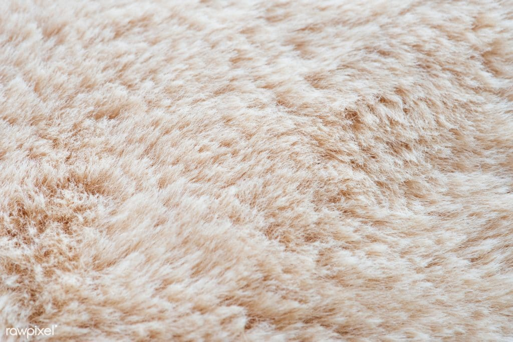 closeup of cream colored carpet